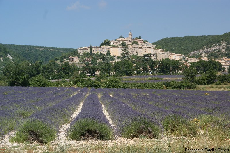 Lavendelfeld - Ferienhaus in Cavalaire Südfrankreich