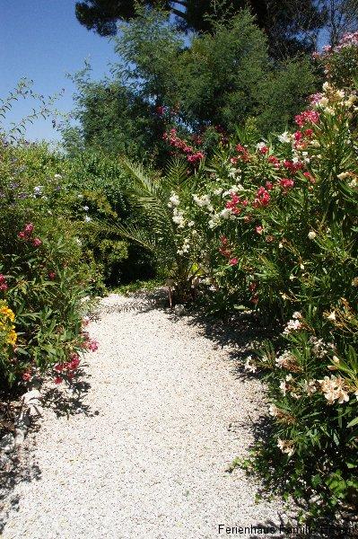 Garten - Ferienhaus in Cavalaire Südfrankreich